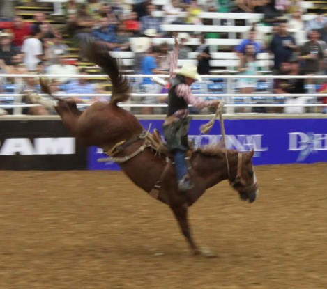 Saddleback bronc riding