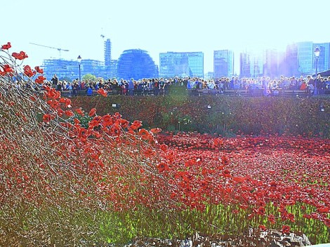 Poppy installation6