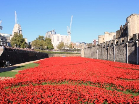 Poppy installation8